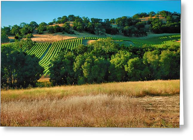 Vineyard Prints Greeting Cards - Paso Robles Vineyard Greeting Card by Steven Ainsworth