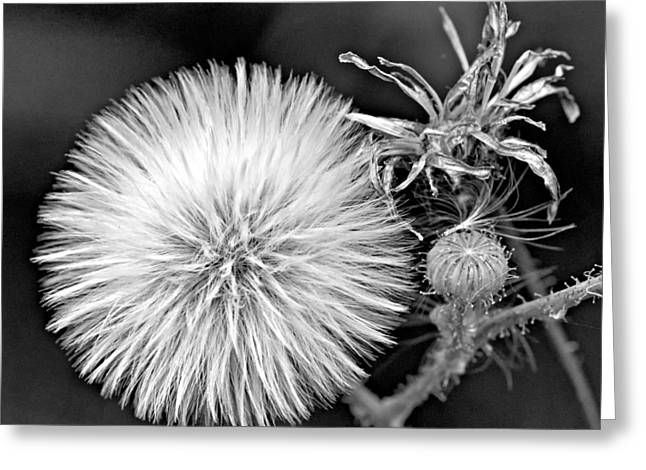 Maturity Greeting Cards - Passages monochrome Greeting Card by Steve Harrington