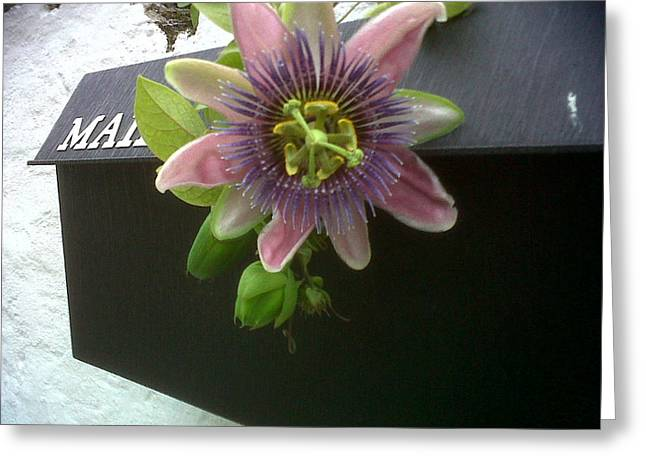 Passionflower Greeting Cards - Passion flower Greeting Card by Lise Pellegrin