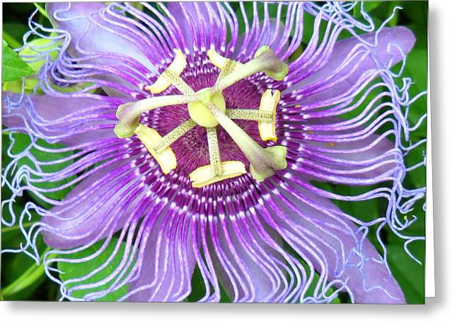 Passiflora Digital Art Greeting Cards - Passion Flower Greeting Card by Sheri McLeroy