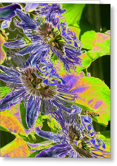 Passionflower Pyrography Greeting Cards - Passion Flowers with Honey Bee Greeting Card by Olivia Novak
