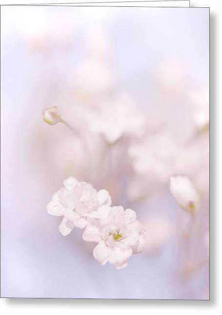 Passion For Flowers. White Pearls Of Gypsophila Greeting Card by Jenny Rainbow