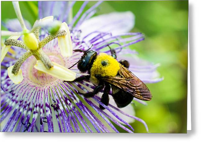 Passion Fruit Flower And Bee Greeting Card by Mike Shaw