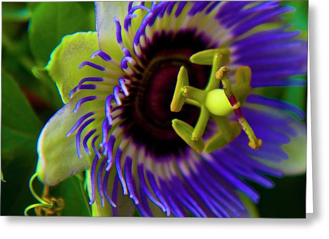 Passion Fruit Photographs Greeting Cards - Passion-Fruit Flower Greeting Card by Betsy A  Cutler