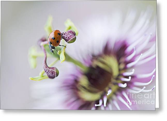 Passionflower Photographs Greeting Cards - Passion Lady Greeting Card by Jacky Parker