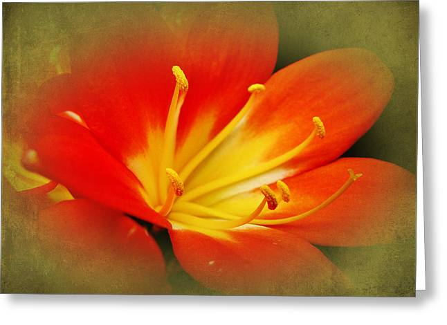 Mother Nature Greeting Cards - Passionate Red Greeting Card by Mother Nature
