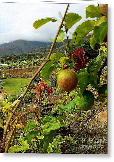 Lilikoi Greeting Cards - Passionfruit on the Vine with a View of the Valley   Maui Greeting Card by J R Stern