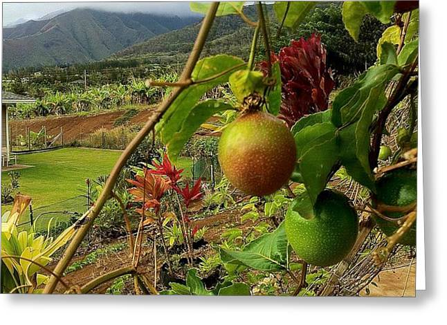 Passionfruit on the Vine with a View of the Valley   Maui Greeting Card by J R Stern