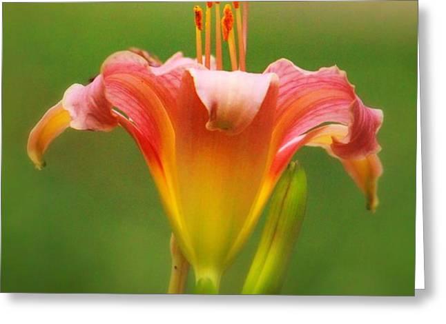 Pastel Lilyform Greeting Card by Deborah  Crew-Johnson