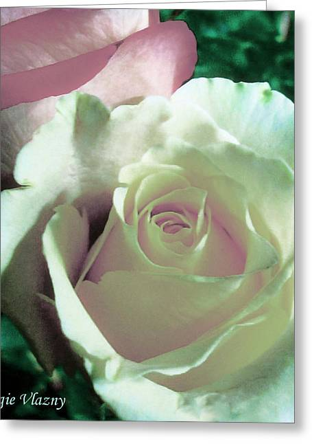 Femina Photo Art Greeting Cards - Pastel Pink and White Rose Greeting Card by Maggie Vlazny