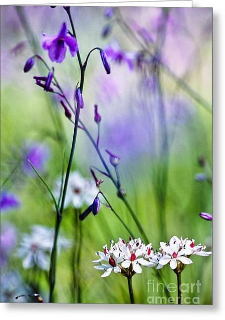 David Lade Greeting Cards - Pastel wildflowers Greeting Card by David Lade