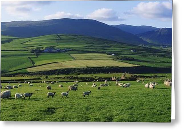 Pastoral Scene Near Anascual, Dingle Greeting Card by The Irish Image Collection