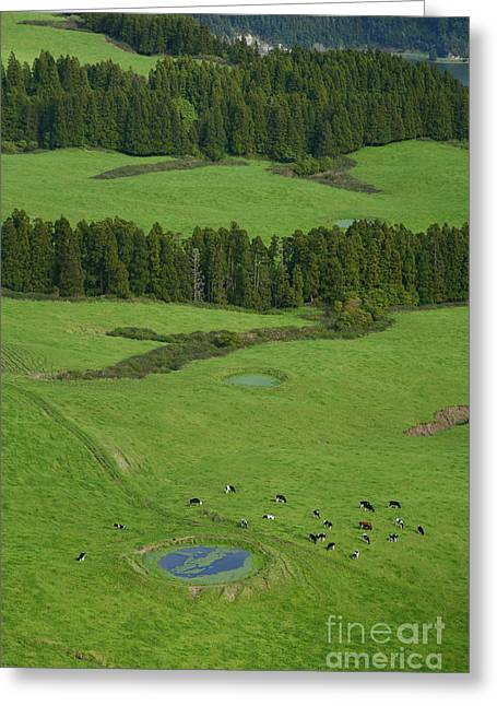 Green Pastures Greeting Cards - Pastures in Azores islands Greeting Card by Gaspar Avila
