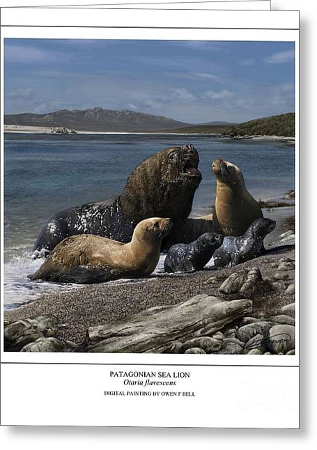 Sea Lions Digital Art Greeting Cards - Patagonian Sea Lion Bull With Harem And Pups Greeting Card by Owen Bell