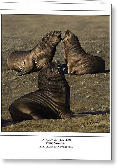 Sea Lions Digital Art Greeting Cards - Patagonian Sea Lion Pups Greeting Card by Owen Bell