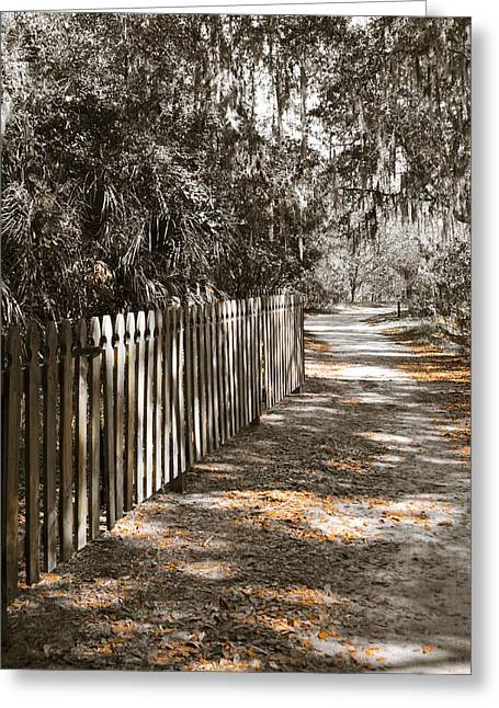Path In Life Greeting Cards - Path Along The Fence Greeting Card by Carolyn Marshall