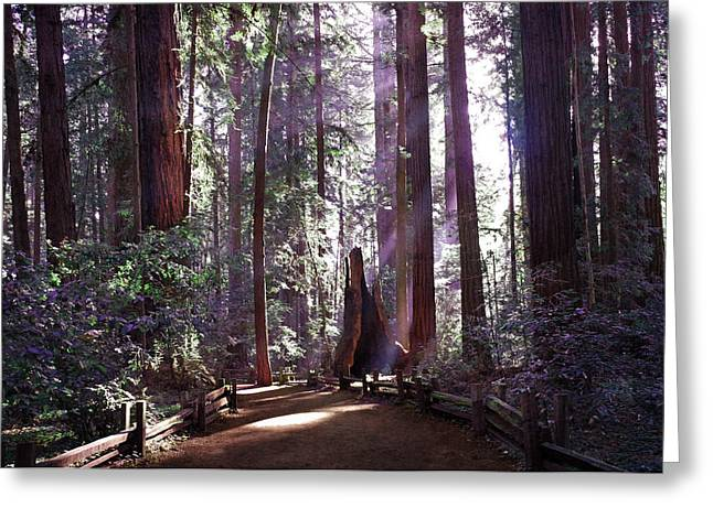 Path By An Ancient Redwood Greeting Card by Laura Iverson