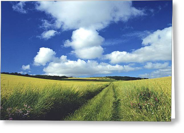 Sowing Greeting Cards - Path in a countryside Greeting Card by Bernard Jaubert