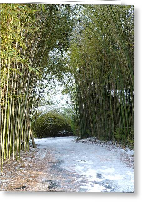 Path In Bamboo Field Greeting Card by Renee Trenholm