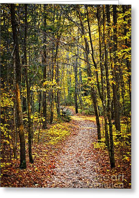 Deciduous Greeting Cards - Path in fall forest Greeting Card by Elena Elisseeva