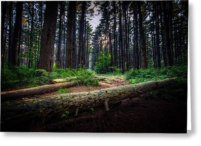 Pine Needles Greeting Cards - Path in the Pines Greeting Card by Everet Regal