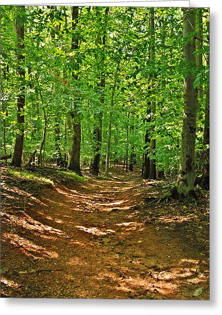 Shadows Framed Prints Greeting Cards - Path In The Woods - Holmdel Park Greeting Card by Angie Tirado