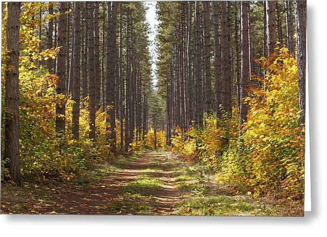 Path Into The Forest In Autumn Sault Greeting Card by Susan Dykstra