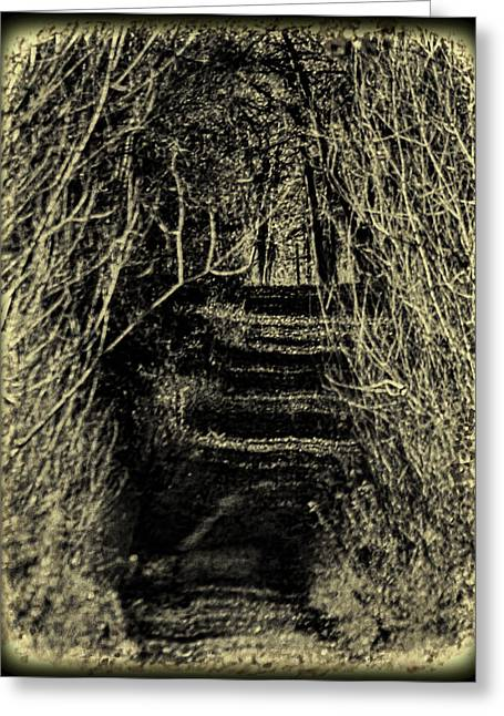 Overhang Greeting Cards - Path of Sticks Greeting Card by Thomas Young