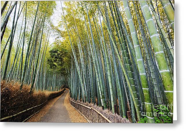Kyoto Greeting Cards - Path Through a Bamboo Forest Greeting Card by Jeremy Woodhouse