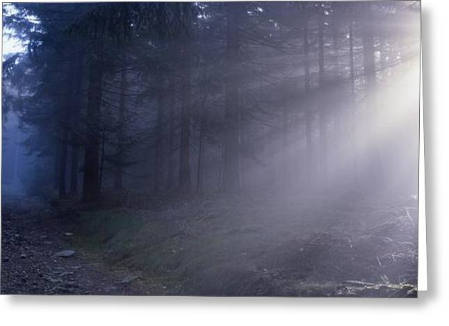 Sun Breakthrough Greeting Cards - Path through a misty forest Greeting Card by Intensivelight