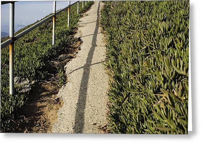 Path through Grasslands Greeting Card by sam bloomberg-rissman