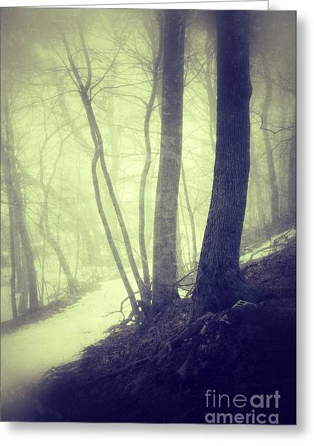 Rural Snow Scenes Photographs Greeting Cards - Path Through Misty Snowy Woods Greeting Card by Jill Battaglia
