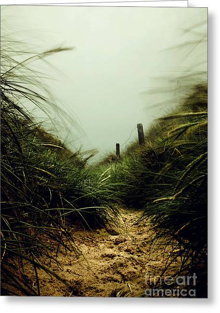Hannes Cmarits Greeting Cards - Path Through The Dunes Greeting Card by Hannes Cmarits