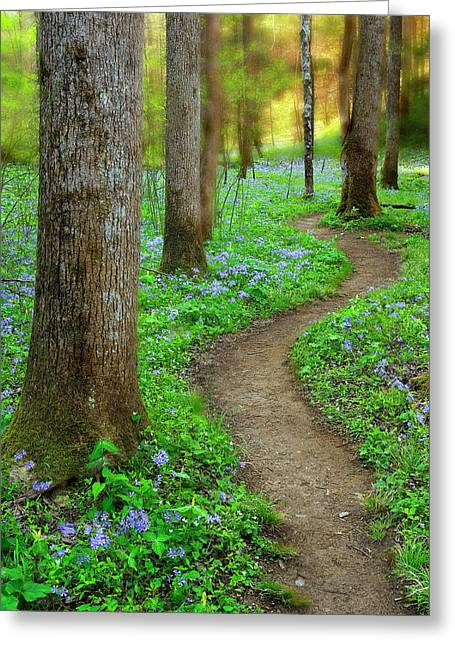 Early Sink Greeting Cards - Path thru the Trees Greeting Card by Tony Gayhart
