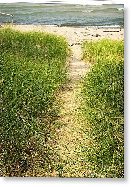Grasses Greeting Cards - Path to beach Greeting Card by Elena Elisseeva