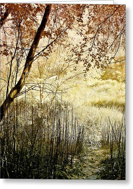 Soft Light Greeting Cards - Path to the Meadow Greeting Card by Ellen Heaverlo