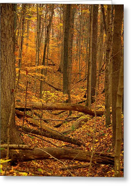 Indiana Autumn Greeting Cards - Path To The River Greeting Card by Ed Smith