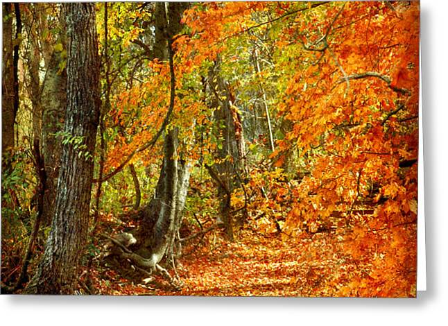 Pathway Through Autumn Woods Greeting Card by Cheryl Davis