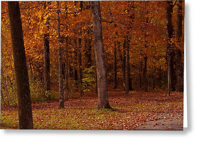 Foliage Photographs Greeting Cards - Pathway Thru The Woods Greeting Card by Robert  Torkomian