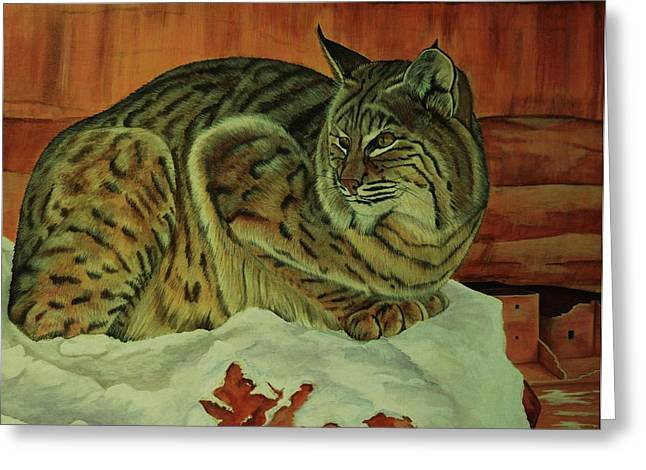 Bobcats Greeting Cards - Patience Greeting Card by Lucy Deane