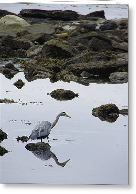 Port Renfrew Greeting Cards - Patiently Waiting Greeting Card by Marilyn Wilson