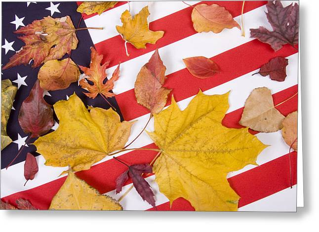 Patriotic Autumn Colors Greeting Card by James BO  Insogna