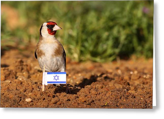 Flag Pyrography Greeting Cards - Patriotic goldfinch Greeting Card by Alon Meir