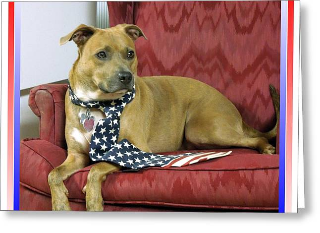Apbt Greeting Cards - Patriotic Greeting Card by Renee Trenholm