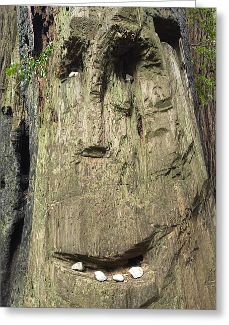 Big Sur California Greeting Cards - Patterns In A Redwood Resemble A Human Greeting Card by Rich Reid