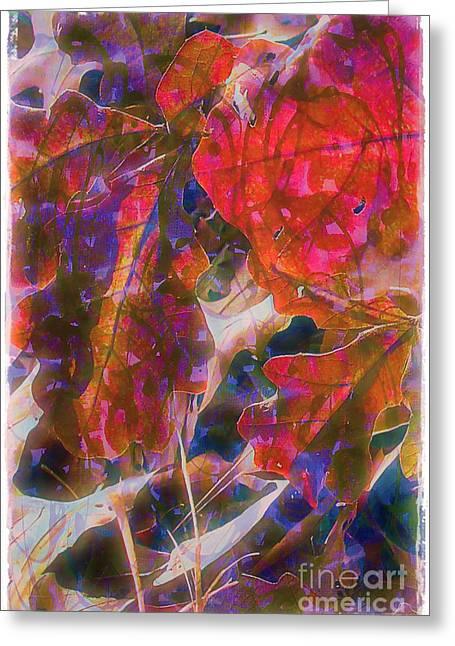 Patterns In Scarlet Greeting Card by Judi Bagwell
