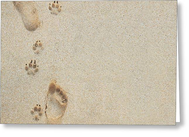 Paw and Footprints 2 Greeting Card by Brandon Tabiolo - Printscapes
