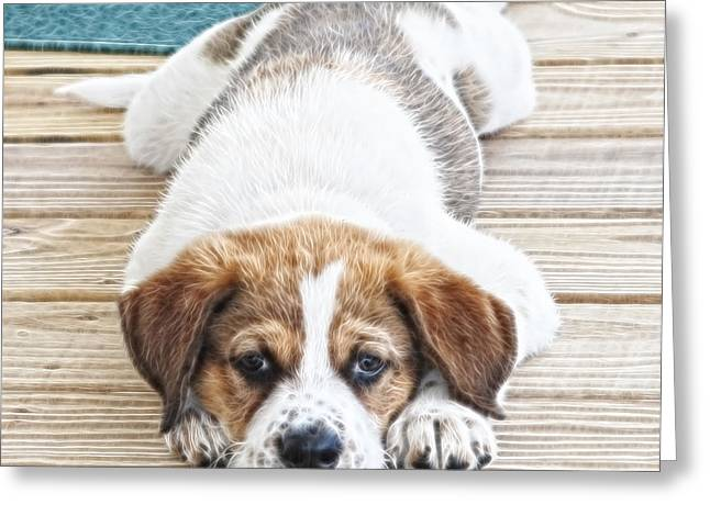 Puppies Photographs Greeting Cards - Paws for Thought Greeting Card by Tilly Williams