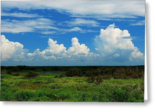 Moving Petals Greeting Cards - Paynes Prairie Panorama Greeting Card by Tammy Dial Gray