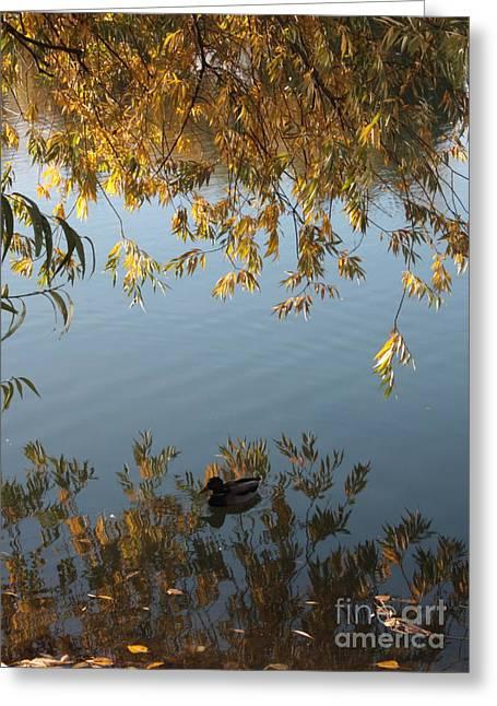 Spokane Greeting Cards - Peaceful Autumn Day Greeting Card by Carol Groenen